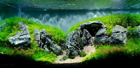 Aquascaping With Rocks by The Top 10 Most Beautiful Freshwater Aquascapes Of 2012