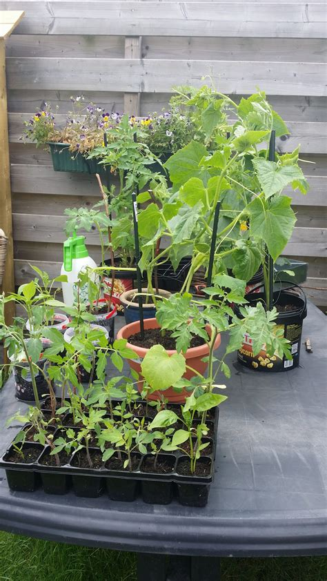 kleine plantjes worden groot vanita s kookblog