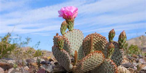 Anza Borrego Desert Flowers death valley plants amp animals
