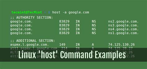 Python Dns Lookup Useful Host Command Exles For Querying Dns Lookups