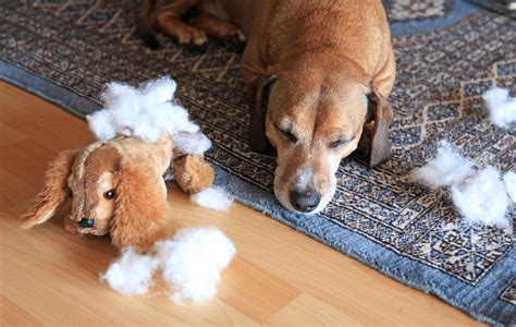 how much chocolate can kill a easter bunny no friend to dogs dogslife breeds magazine