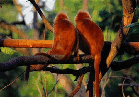 funny monkey picture monkeying  monkeys   evil