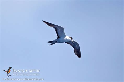 pelagic birding rockjumper birding tours worldwide