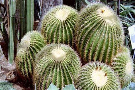 jenis tanaman tahan panas matahari  udara kering