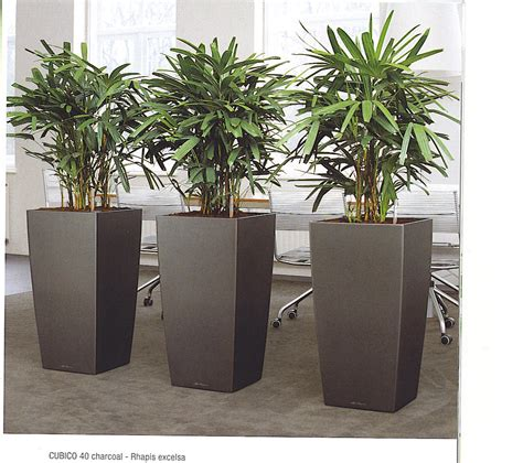 indoor plants office plants jersey