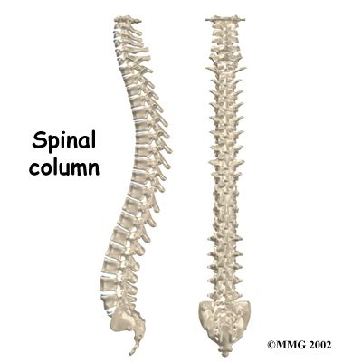 spinal stenosis diagram human anatomy diagram spine bones pictures and