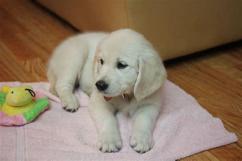 cutest puppies on earth cutest puppies on earth www imgkid the image kid has it