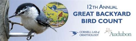 Cornell Great Backyard Bird Count by Great Backyard Bird Count Chickadees Juncos And Jays