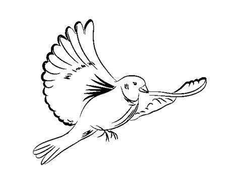 coloring page dove turtle dove coloring page coloring pages