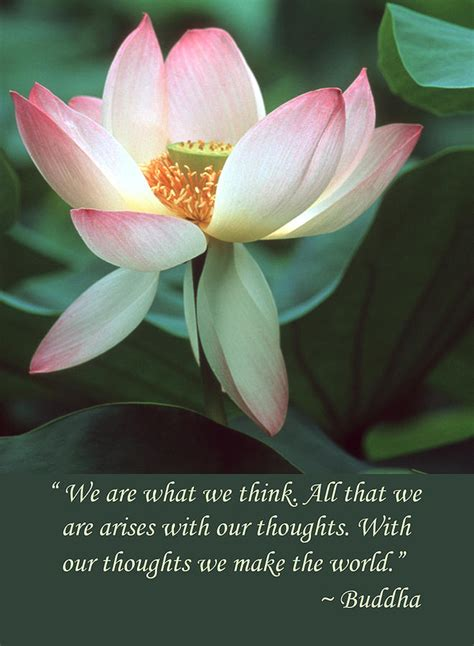 lotus flower buddha quote photograph by chris scroggins