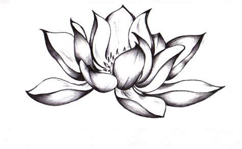 Lotus Black And White Outline by Lotus Zeichnung Bilder Lotus Zeichnung Bild Und Foto Blumen Bilder