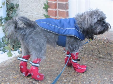 dog boat clothes milo s closet keeping your dog warm in cold weather