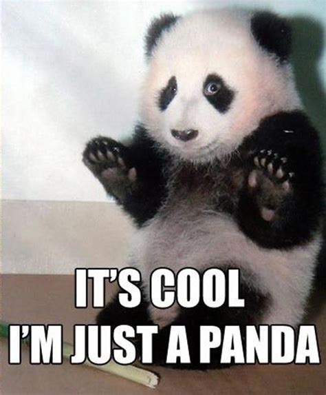 Cute Panda Memes - animals cute funny haha panda image 260309 on favim com