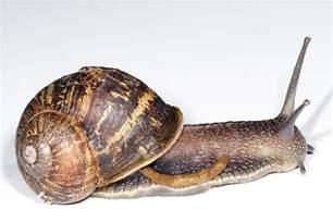 fail garden snail jpg bahasa melayu