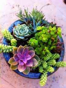 succulent pots my decorative