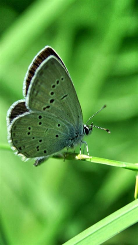 wallpaper green butterfly green butterfly wallpaper wallpapersafari