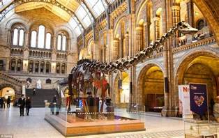 History Museum History Museum To Replace Dippy The Diplodocus
