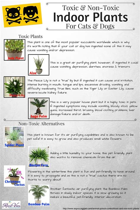 non toxic house plants for dogs non toxic indoor plants for cats and dogs