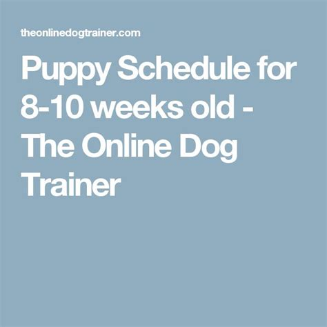 puppy schedule week by week best 25 puppy room ideas on