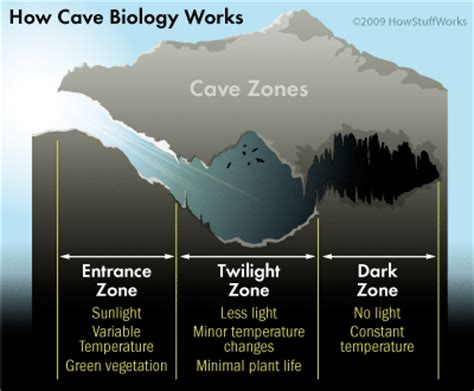 parts of a cave diagram cave zones cave zones howstuffworks