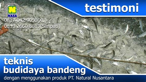 Pupuk Organik Untuk Tambak Bandeng pupuk untuk tambak bandeng 08170429050 xl 081326608813