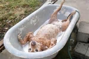 2 dogs in a bathtub can my use the tub bullfrog spas