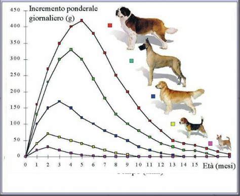 alimentazione e patologie il cucciolo calcio alimentazione e patologie scheleriche