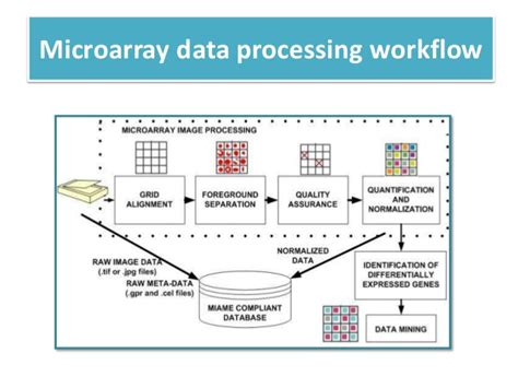 microarray workflow microarray workflow 28 images molecular therapy figure