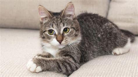 wann katzen sterilisieren lassen haustiere tipps f 252 r den fellwechsel beim haustier