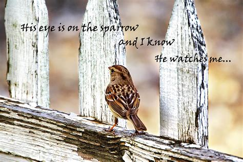 his image his eye is on the sparrow with quote photograph by abram house
