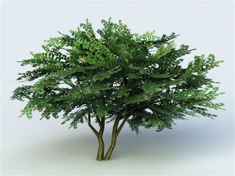 Crape Myrtle Tree 3d Model 3ds Max Files Free Download