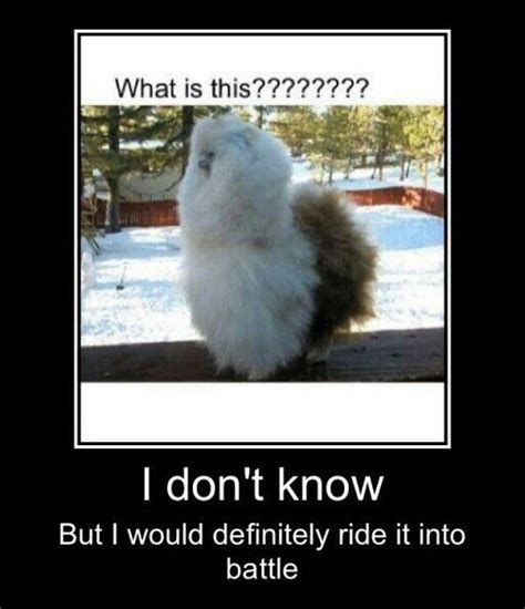 Shaved Llama Meme - 1000 ideas about shaved llama on pinterest pics of