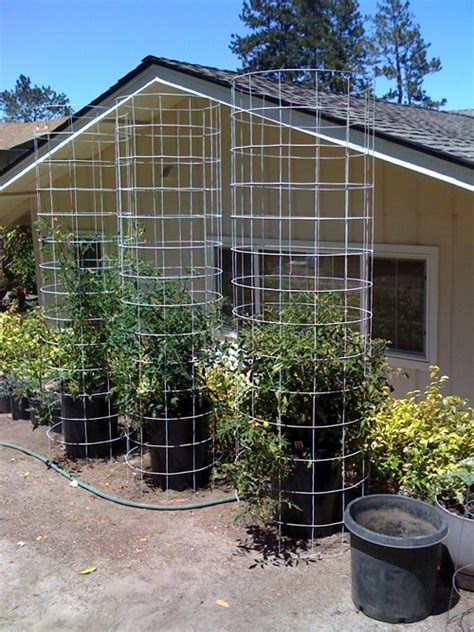how to cage a tomato cage how to make a tomato cage