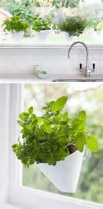 hanging plants from ceiling indoor garden idea hang your plants from the ceiling