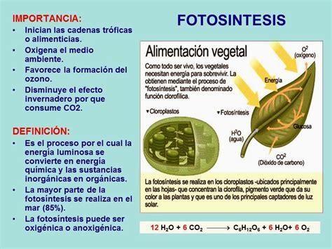 significado de cadenas en griego animales 191 fotosint 201 ticos bich 243 logo
