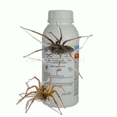 mittel gegen spinnen haus spinnen tiere arten giftige bek 228 mpfungs mittel