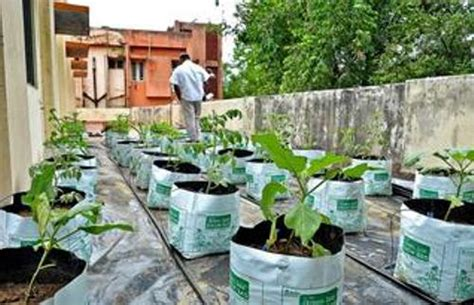 How To Make Vegetable Garden On Terrace 5 Ideas For Green Vegetable Gardening In Terrace