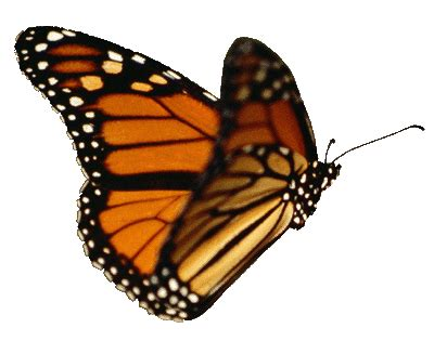 dp bbm gif animasi bergerak naruto   kupu kupu