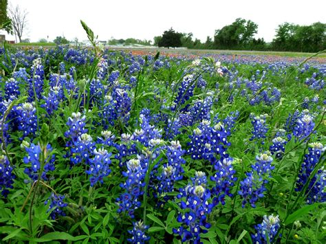 Central texas gardening providing informational horticultural