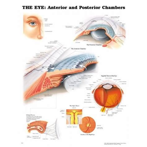 the best of ayes eye anterior and posterior chambers chart eye chambers