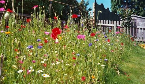 wildflower turf how to create a wildflower area the