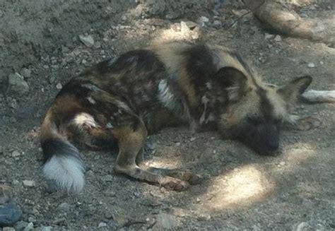 palm desert puppies picture of living desert zoo gardens palm desert tripadvisor