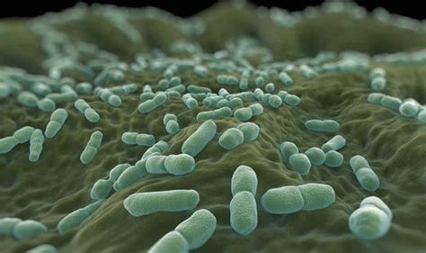 listeria   foods   infection