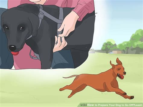 how to your to go leash how to prepare your to go leash with pictures