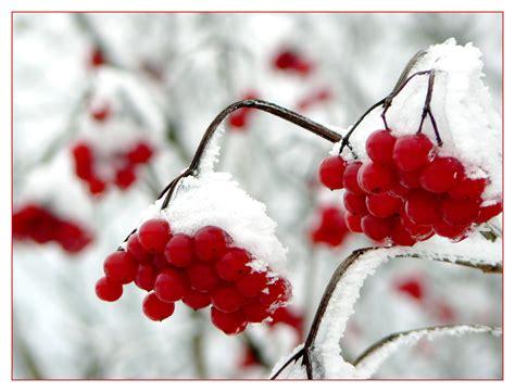 Mainan Salju Frozen Gel Magic Snow images gratuites la nature branche du froid hiver