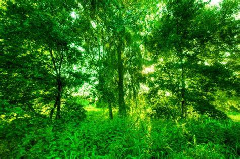 imagenes de bosques verdes bosque verde descargar fotos gratis