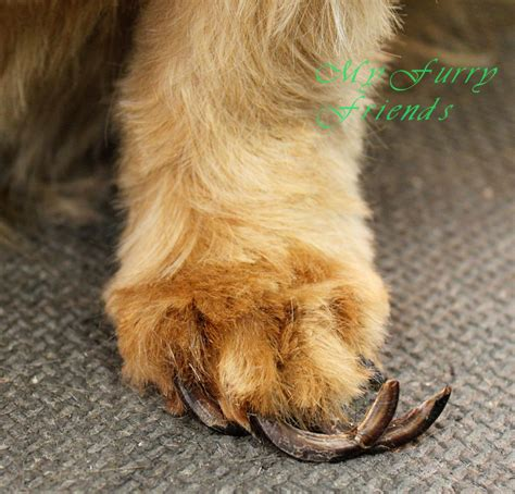 cutting yorkie nails my friends pet grooming self serve pet wash before after photos