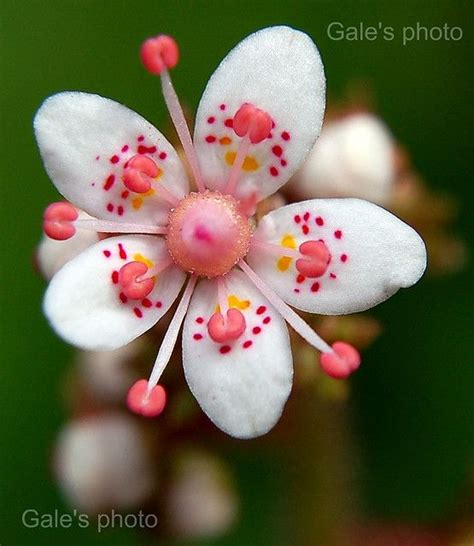 Beautiful Flower Dan Custom Nama pride and flower on