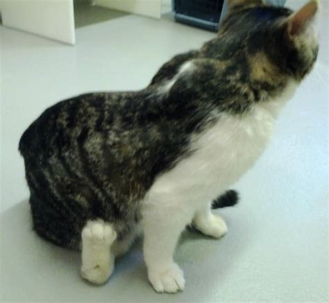 dragging back legs special needs corky finds caring friends at cats cradle with cats