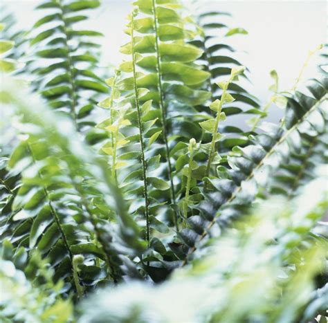 top  air purifying plants   home